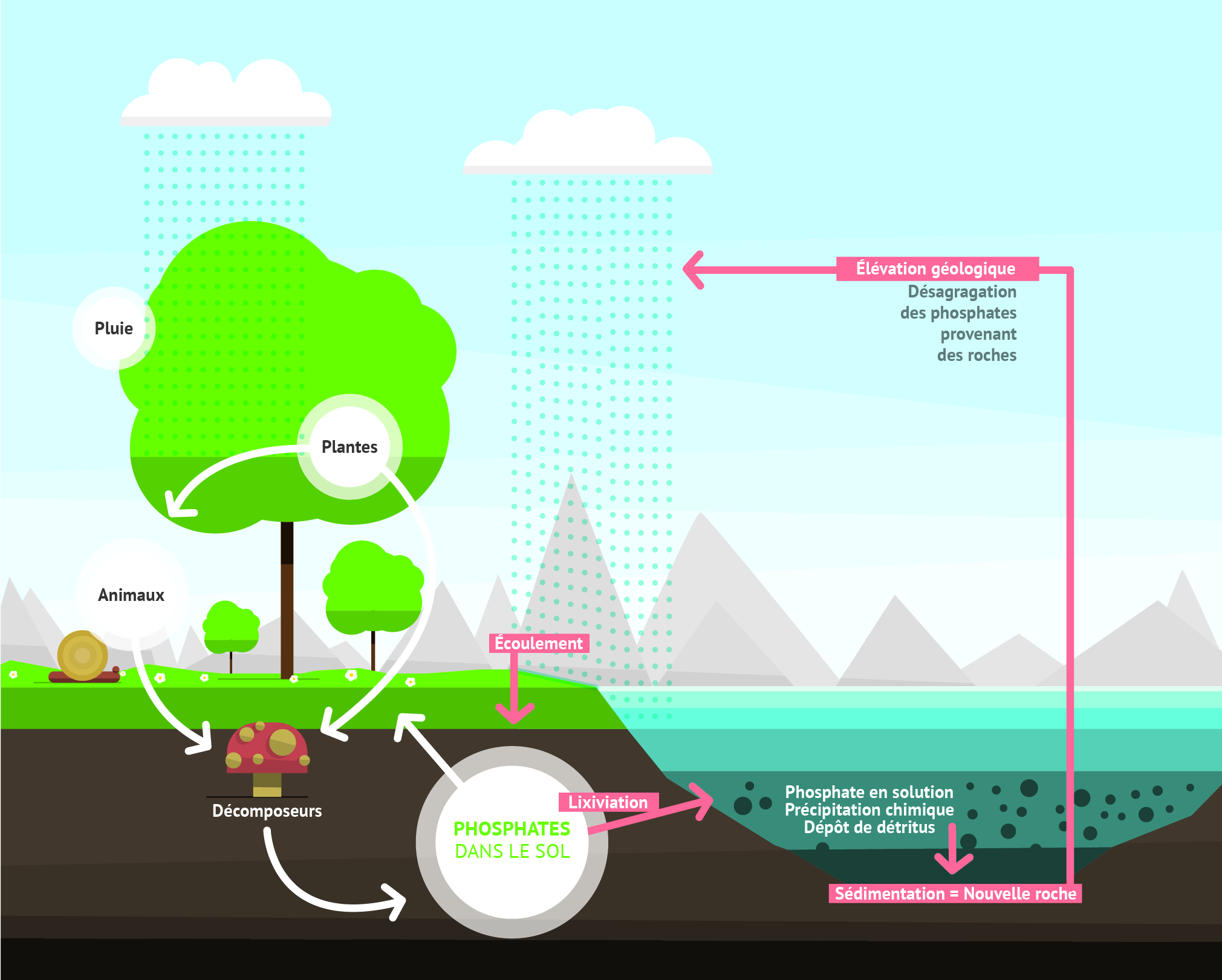 Cycle phosphore